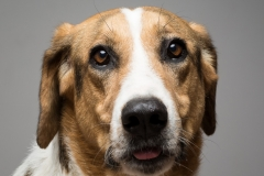 angel-principal