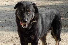 atlas-principal