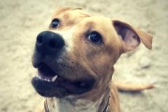 kendra-principal
