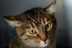 kiss-principal