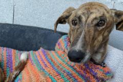 Merlín-principal