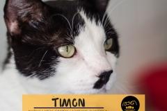 timon-principal