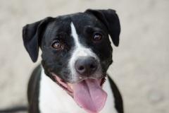 mary-principal